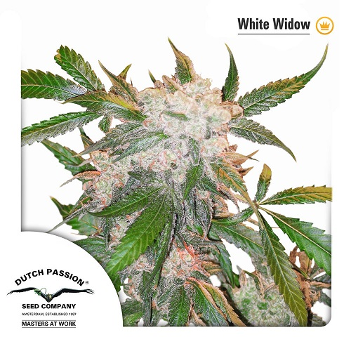 White Widow ®